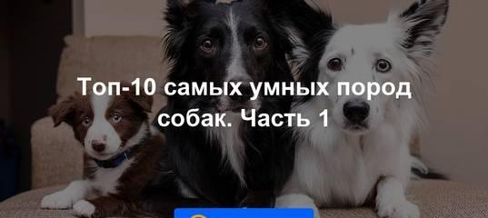 Какие породы собак признаны самыми умными в мире?