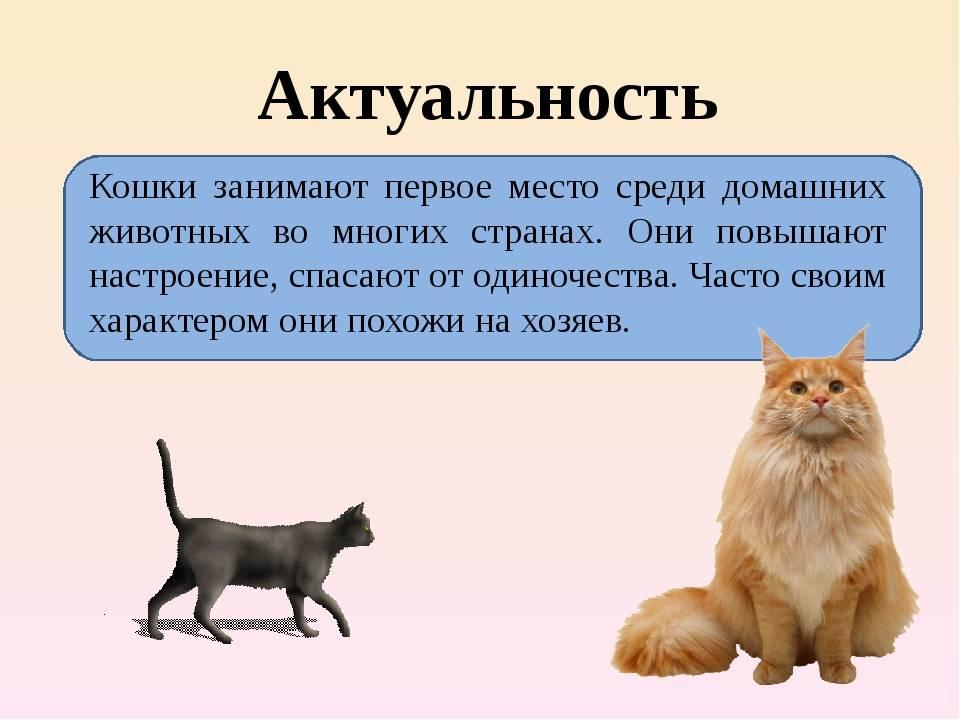 Как развеселить кота