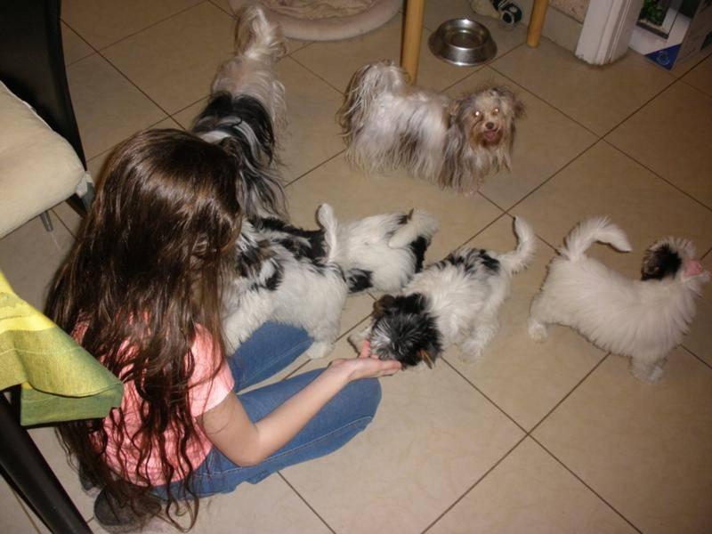 Как уговорить родителей купить собаку, что делать, чтобы подтолкнуть их к покупке? веские аргументы в пользу домашнего питомца