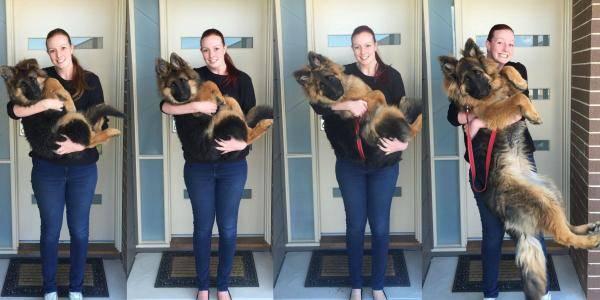 5 этапов развития и роста собаки