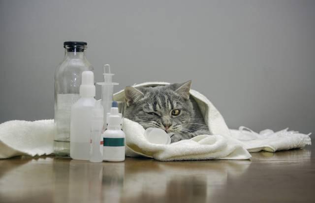 Острый панкреатит собак и кошек (проблематика, причины, патогенез, симптомы и лечение, аспекты профилактики)