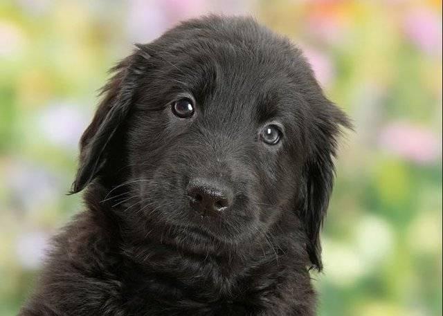 У собаки черный кал: причины темных какашек