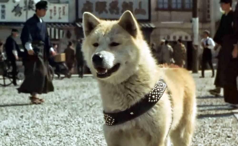 Какая порода у собаки хатико из фильма?