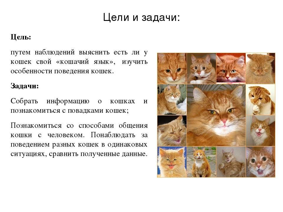 Интересное поведение кошек и его объяснение – pet-mir.ru