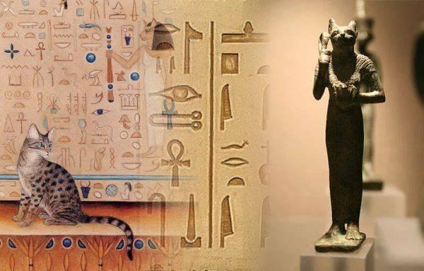 Египетская мау — описание породы и характер кошки