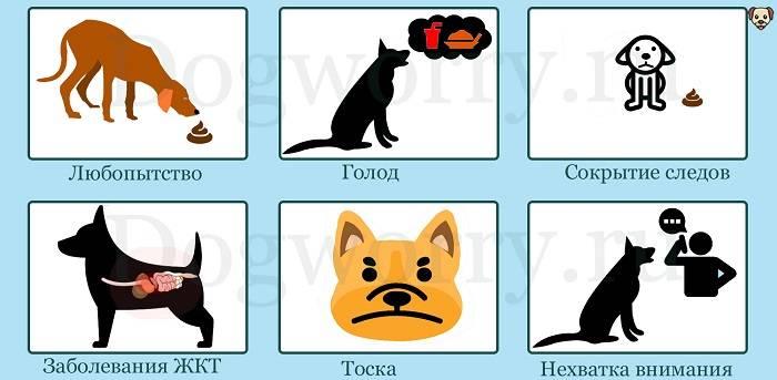 Почему собака ест свой кал? причины и методы корректировки поведения