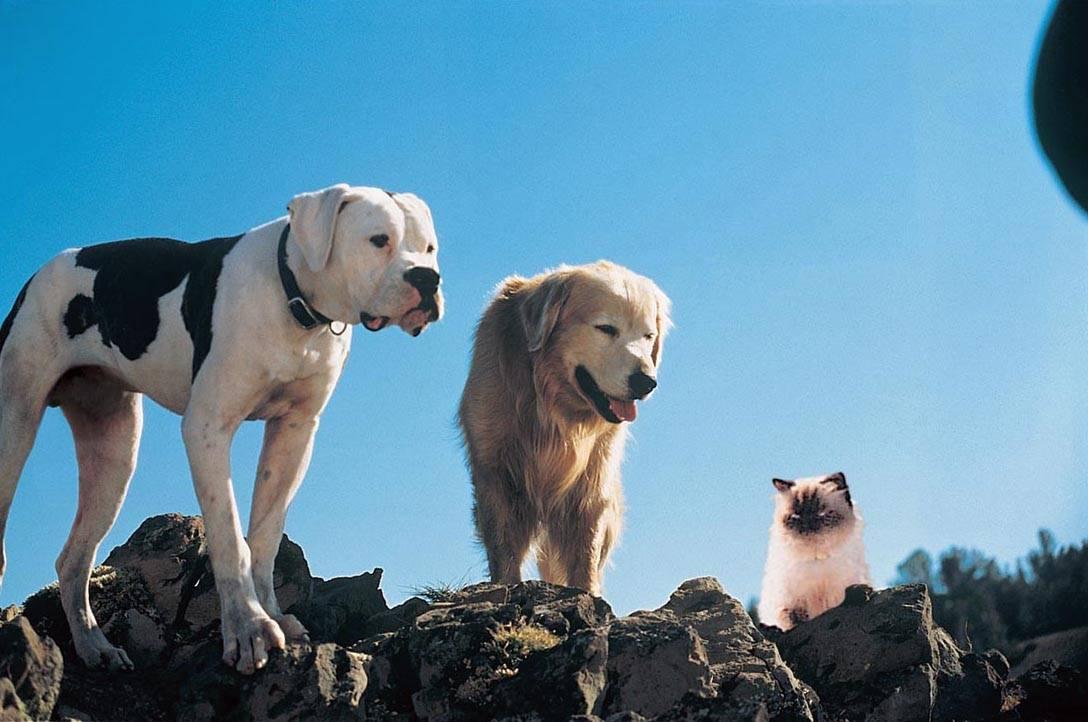 Список лучших собак для путешествий всей семьей