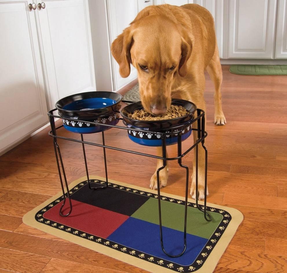 Какие миски для собак лучше: как выбрать миску?