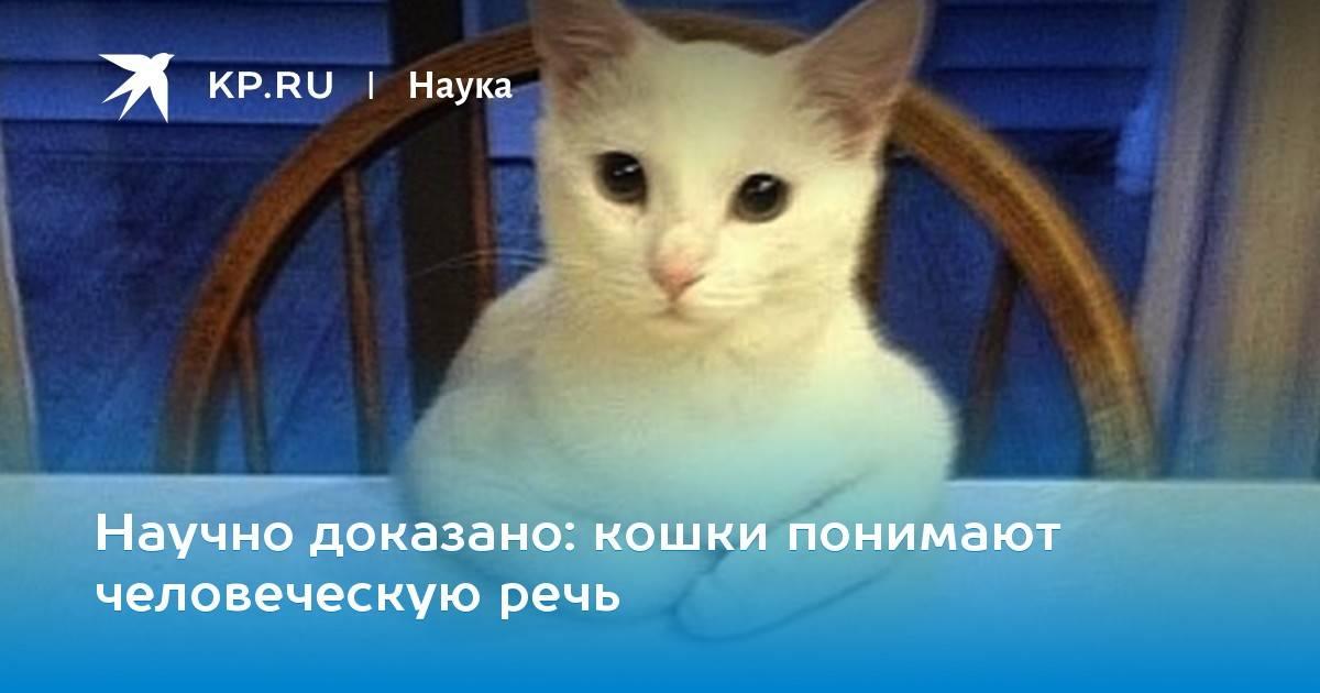 Понимают ли кошки людей: как распознают через интонацию, жесты и запах, кошачья телепатия