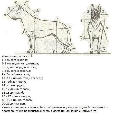 Как измерить рост собаки в холке?