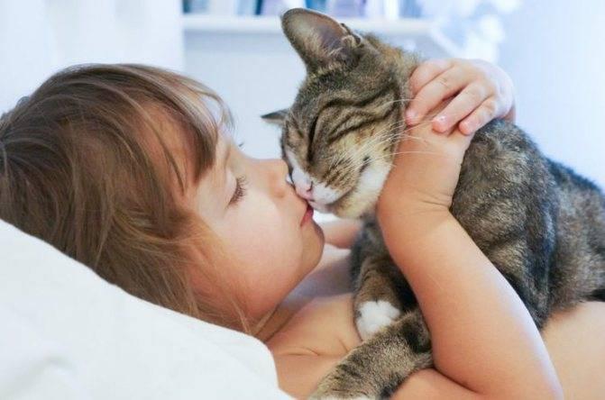 Почему нельзя обнимать и целовать котов и кошек: медицинские и другие аспекты проблемы