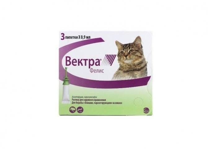 Как вывести блох у кошки и котенка в домашних условиях народными средствами: используем дегтярное мыло, чистотел и другие методы, отзывы