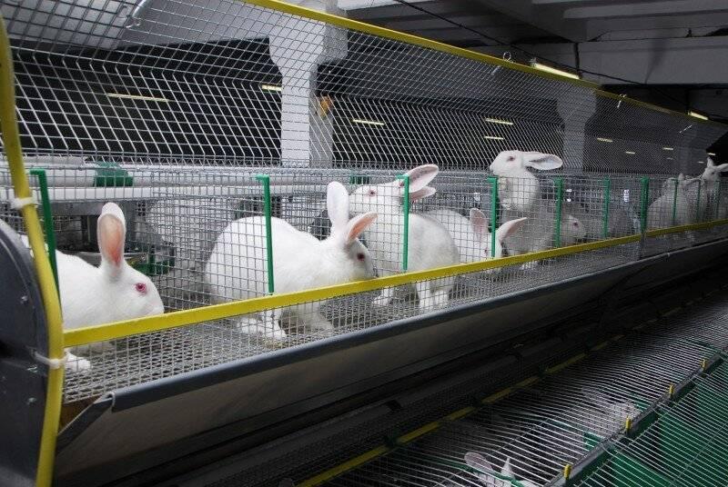Разведение кроликов как бизнес | свое хозяйство