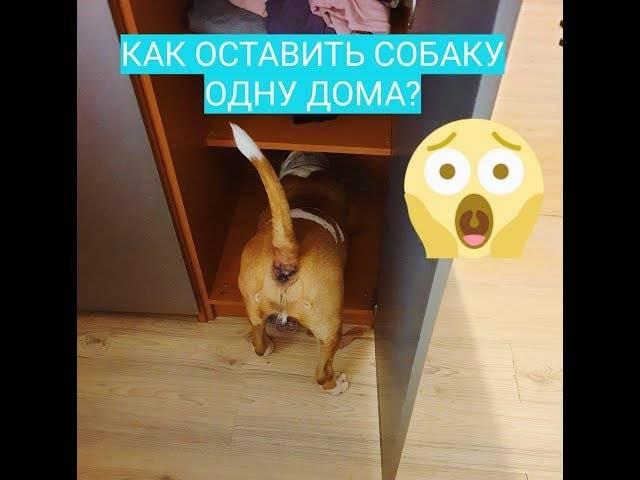 Как отучить скулить собаку в отсутствие хозяев. как отучить собаку лаять и выть дома, когда она остается одна. причины собачьего воя - новая медицина