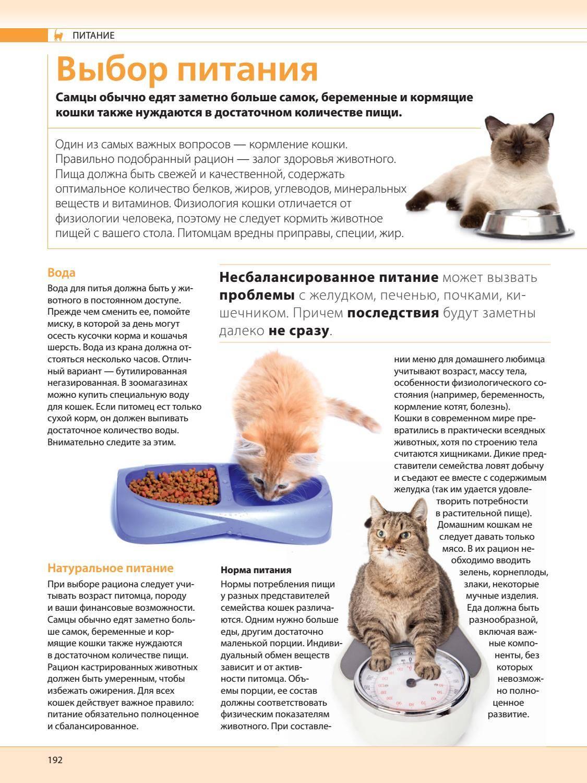 Чем можно и нельзя кормить котенка в 2 месяца: обзор домашней и покупной еды