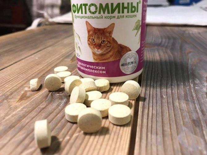 чем кормить кошку: как правильно и сколько раз в день в домашних условиях, каким кормом лучше, а также советы ветеринаров