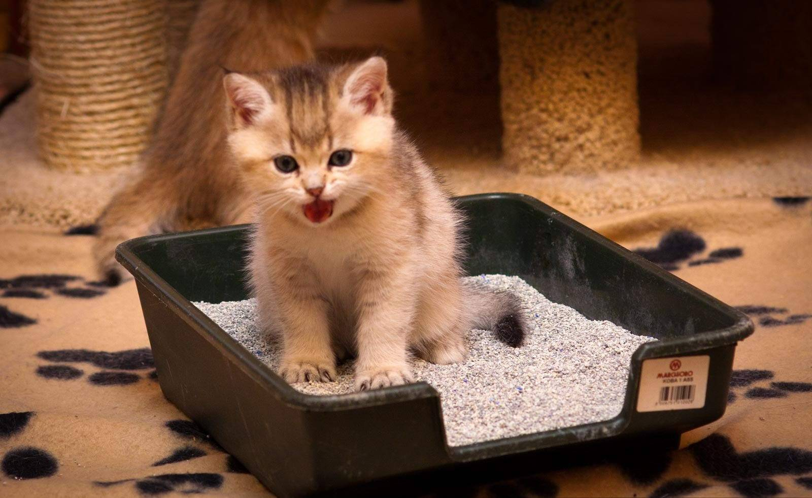 Как приучить котенка к воде: правила, зачем мыть