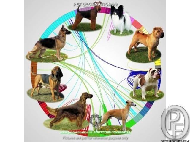 Какие породы псов относятся к волкодавам: виды собак, характеристики