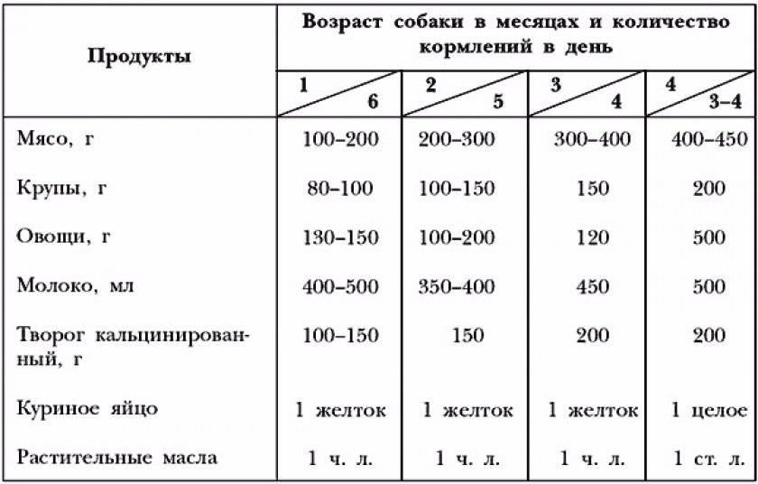Давать ли собаке грызть кости? мелкие или большие? не вредно ли это?(wolcha.ru)