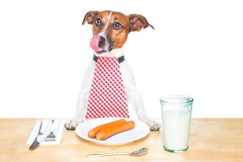 Чем кормить джек-рассел-терьера — от щенка до взрослой собаки