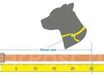 Шлейка для собаки своими руками — пошаговая инструкция