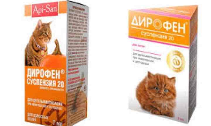 Таблетки от глистов «дирофен плюс» для кошек и собак: инструкция по применению
