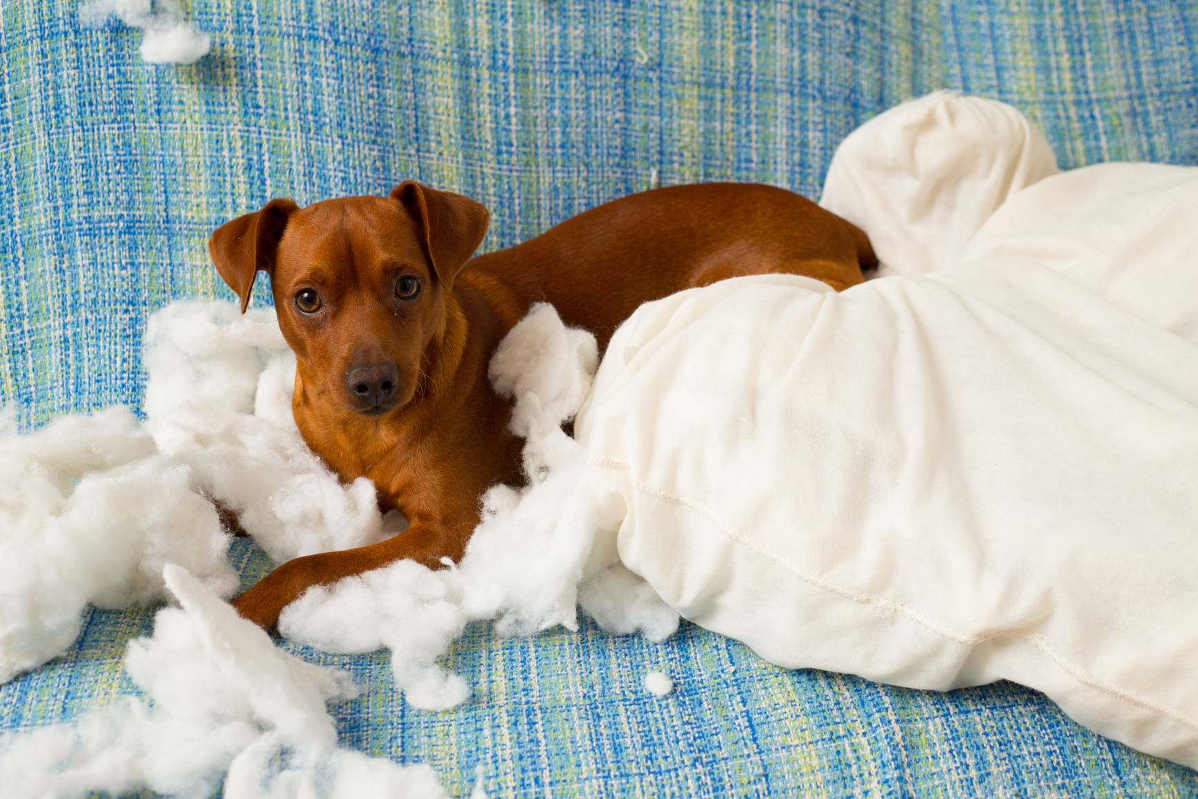 6 шагов как отучить собаку грызть вещи