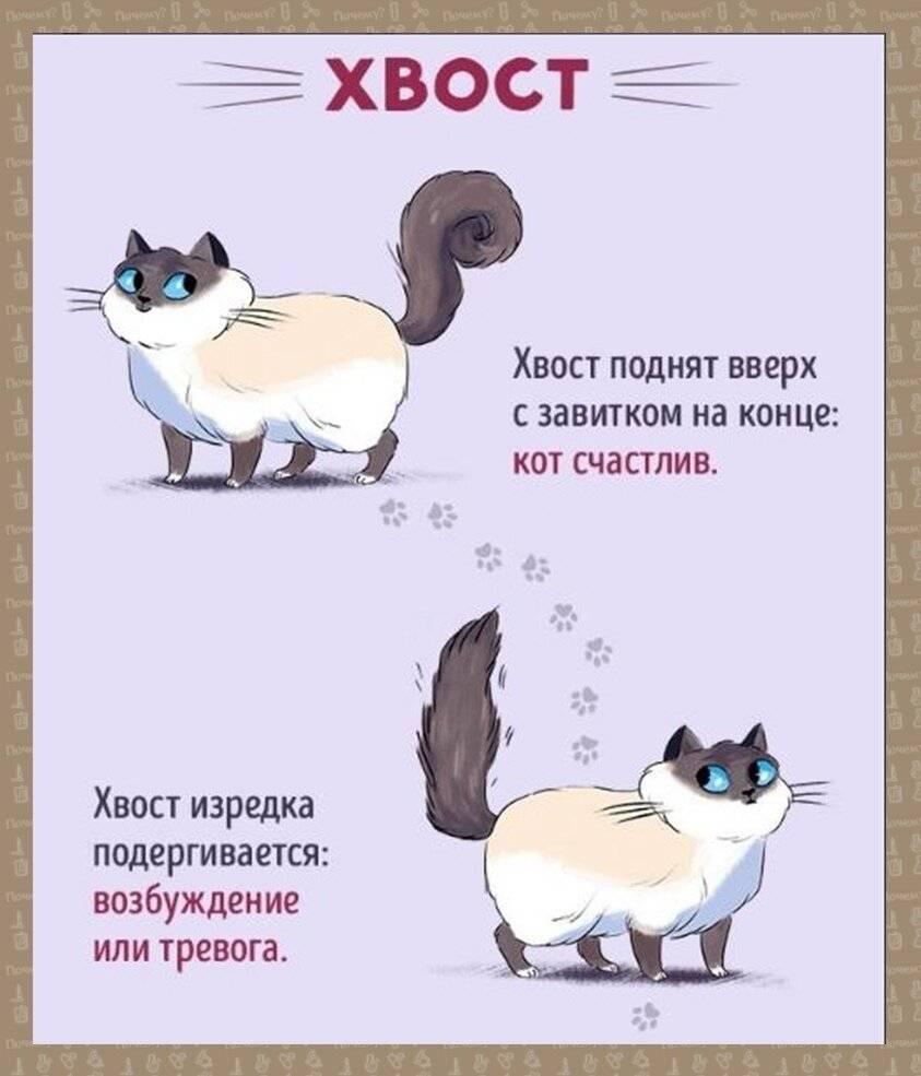 Переводчик с кошачьего на человеческий: как понять животное с помощью их жестов и звуков