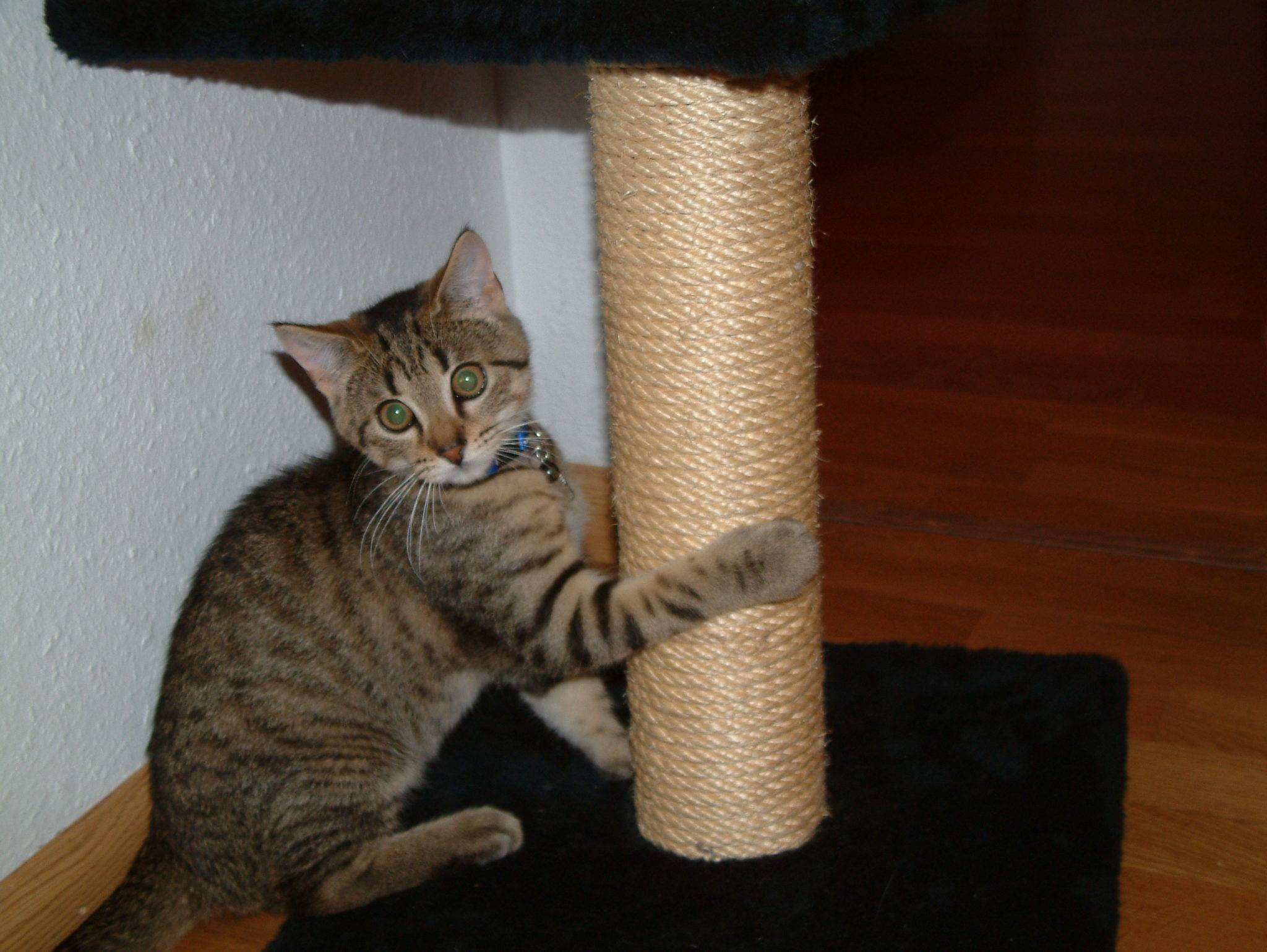 Как приучить котенка к когтеточке: 10 практических способов