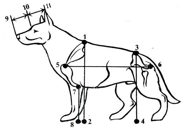 Как измерить рост собаки: 7 шагов (с иллюстрациями)