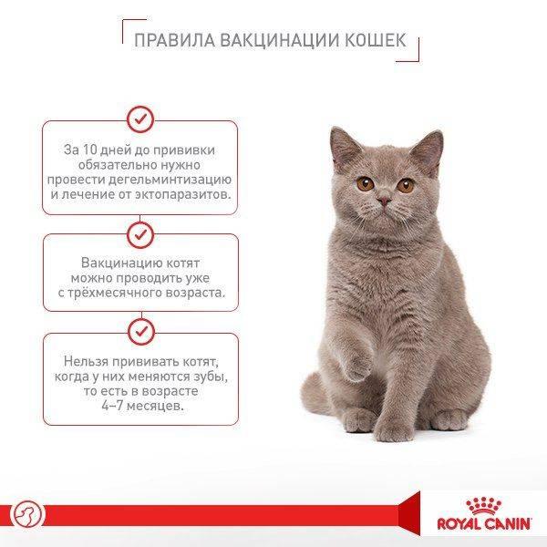 С какого возраста можно глистогонить котят - oozoo.ru