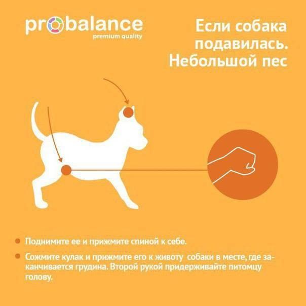 Собака кашляет белой пеной: почему откашливается и срыгивает слизью, что это такое, как лечить