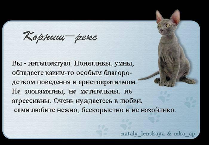Всё о кошках: чем хороши кошки и коты