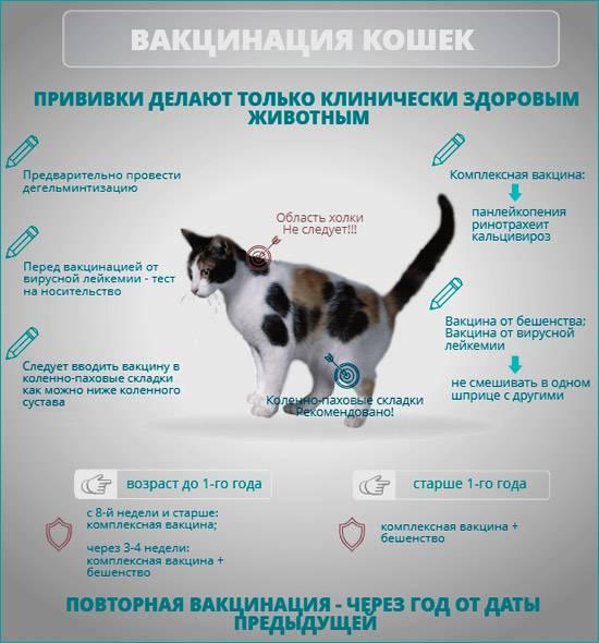 Шишка у кошки — основные симптомы, признаки серьезного заболевания и варианты лечения (100 фото + видео)