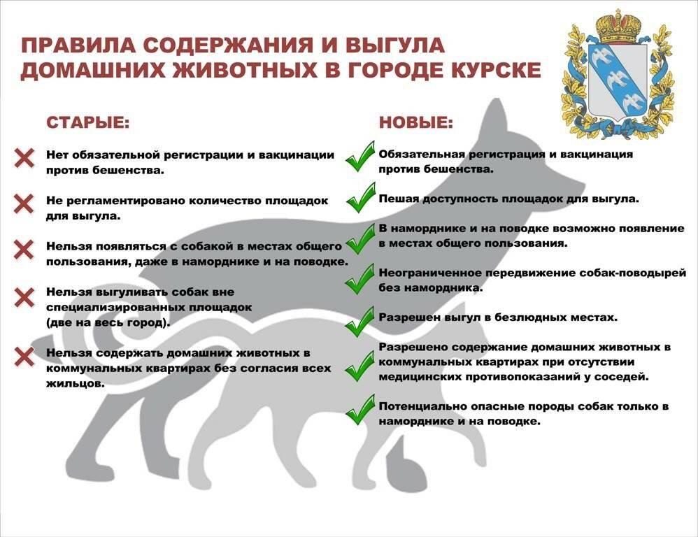 Правила выгула собак в городе — закон рф 2020 года