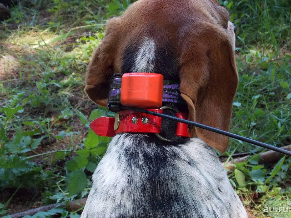 Как правильно выбрать ошейник с gps навигатором для собаки