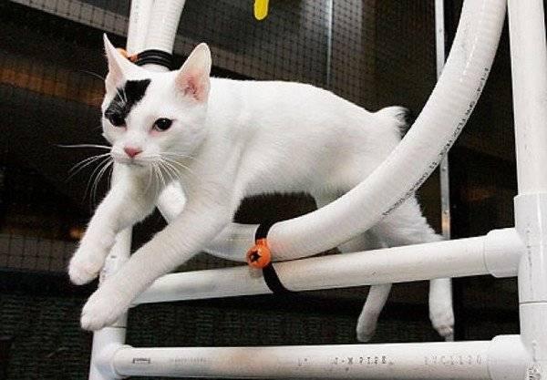 Домашняя дрессировка кошек