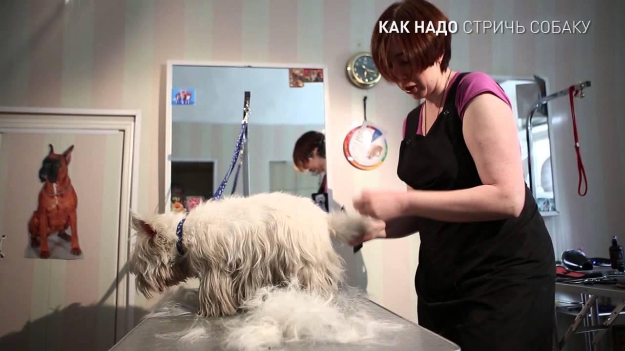Стрижка когтей собаки: все, что нужно знать о процедуре
