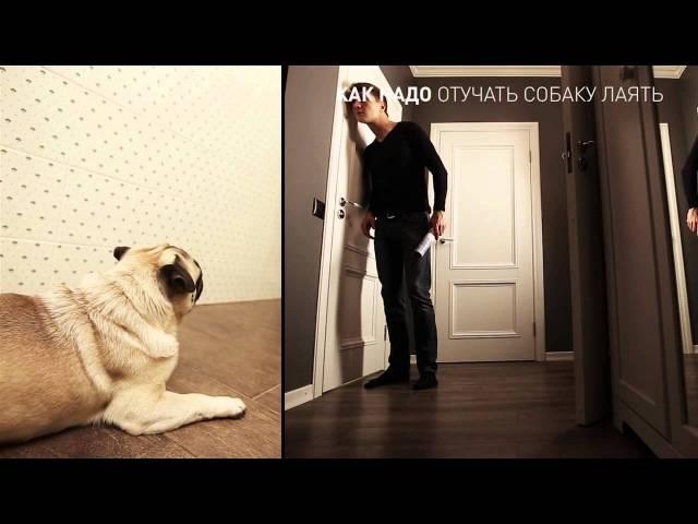 Как отучить взрослую собаку или щенка скулить: простые и проверенные способы