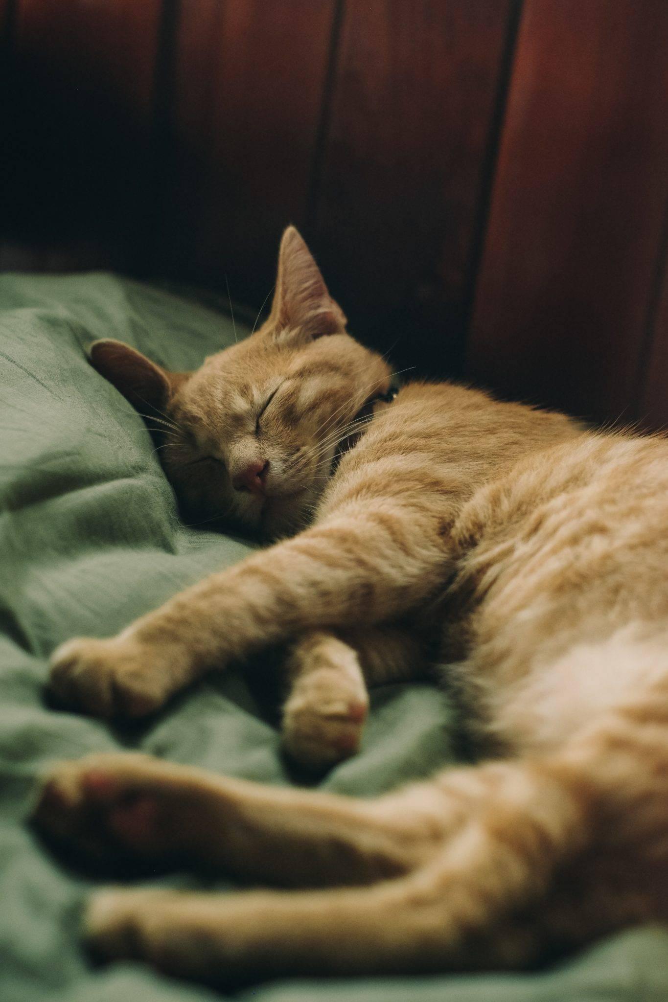 Почему кот лежит на спине