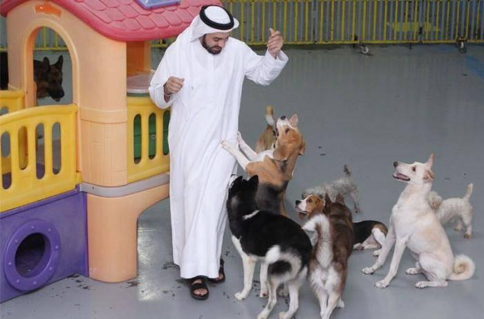 Грязное животное: когда и почему мусульмане стали считать собак нечистыми существами