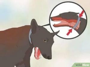 Собака втягивает воздух носом и хрюкает. собака хрюкает при дыхании: признак серьезных заболеваний. собака задыхается и рвет, трясется, бешенство