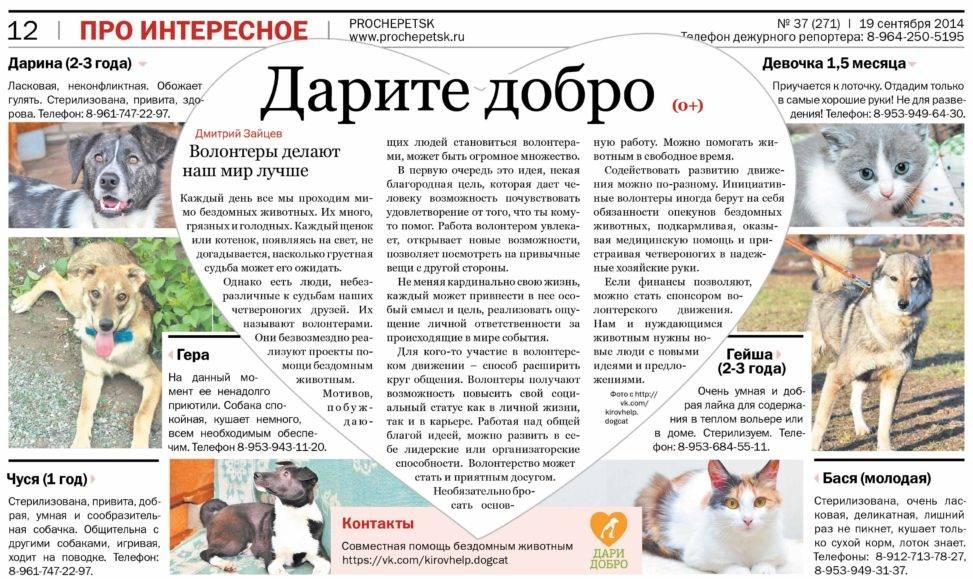 Как открыть приют для животных: пошаговое руководство. открытие приюта для бездомных животных при поддержке государства :: businessman.ru