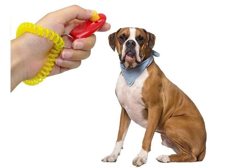 Кликер для собак: применение во время дрессировки. отзывы владельцев