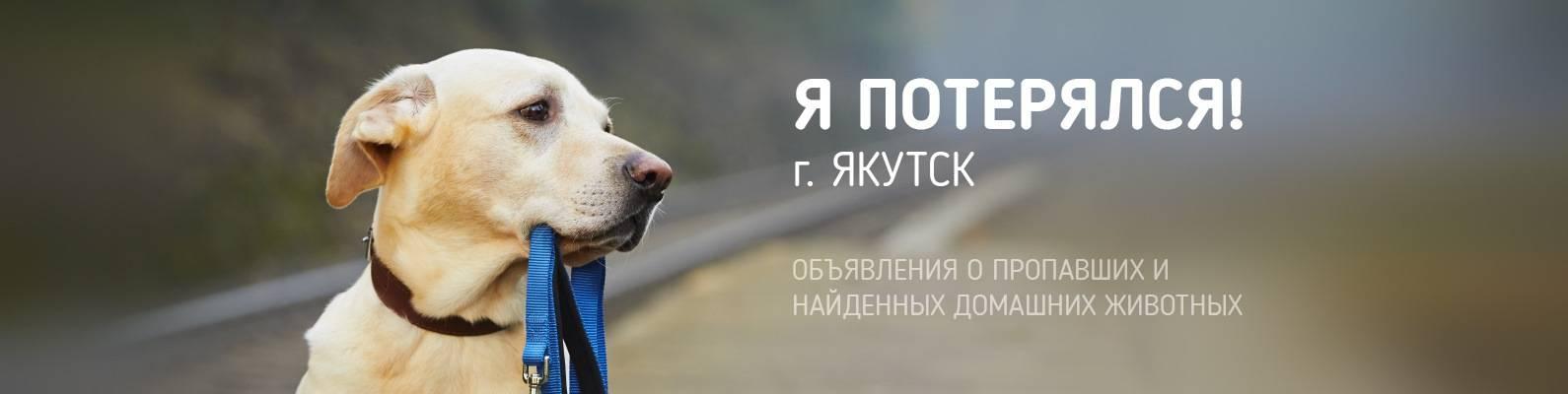 Собака убегает на прогулке или из дома - что делать, как найти собаку | petguru