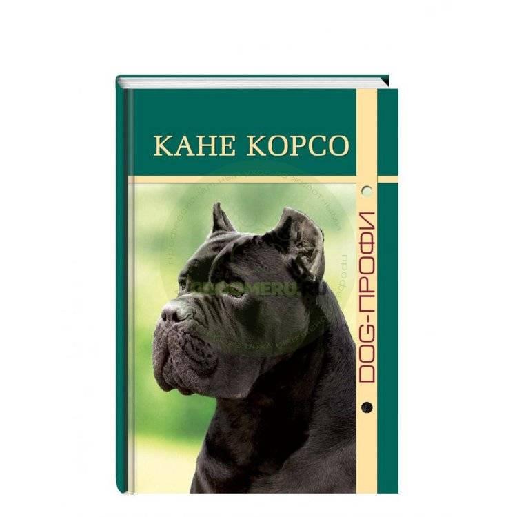 Характер кане-корсо (20 фото): описание породы, достоинства и недостатки собак-девочек и мальчиков. особенности взаимодействия с детьми