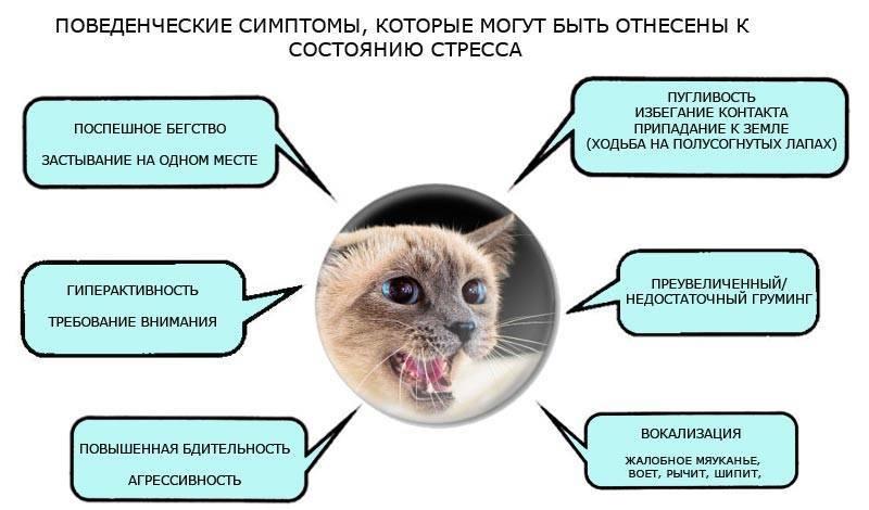 Слюнотечение у кошек: причины и лечение