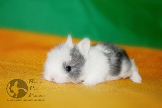 Имена для кроликов девочек и мальчиков: как назвать