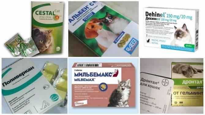 Дронтал для кошек: инструкция по применению, отзывы