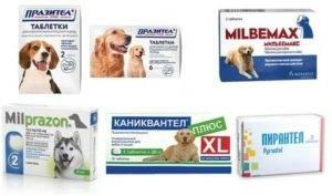 Как вывести глистов у собаки в домашних условиях